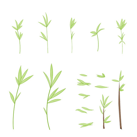 Set of stylized branches with leaves. Isolated on white background in vector. Collection of leaves, twigs, shoots in a cartoon style
