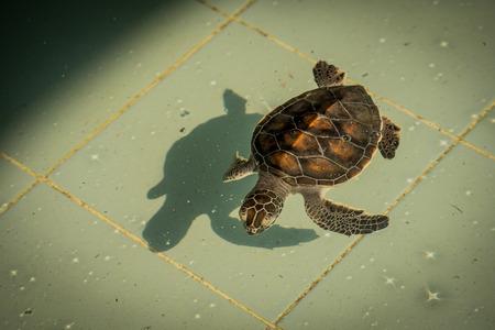 small reptiles: sea turtle in animal hospital