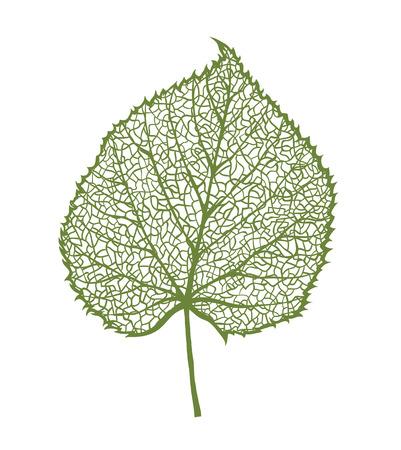 Vector linden leaf, geïsoleerd op een witte achtergrond