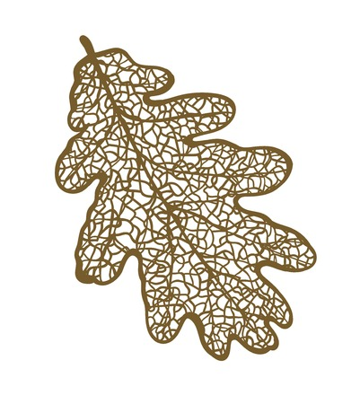 venation: Vector oak leaf, isolated on white background