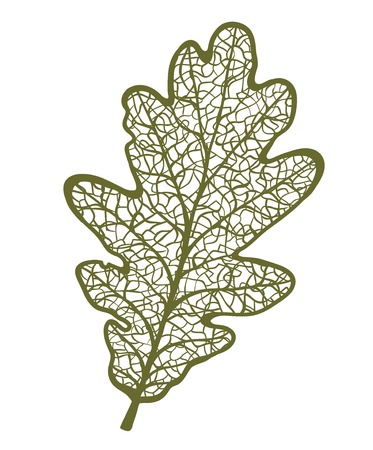 Vector oak leaf, isolated on white background