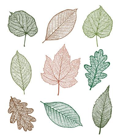 Set van Vector linden, eiken, noten, plataan, esdoorn bladeren, geïsoleerd op een witte achtergrond