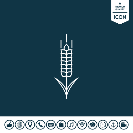 Wheat or rye spikelet icon Vector illustration.