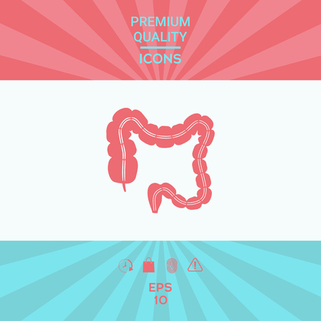Human organ - the large intestine