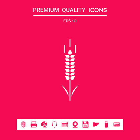 Wheat or rye spikelet symbol icon . Signs and symbols - graphic elements for your design