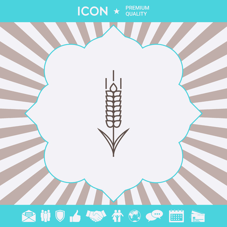 Wheat or rye spikelet icon Illustration