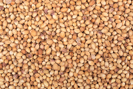 Background of dried coriander seeds. View from above