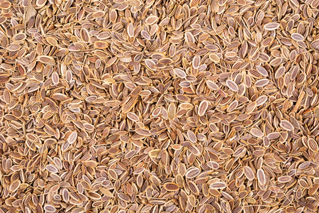Dry fennel seeds background. View from above