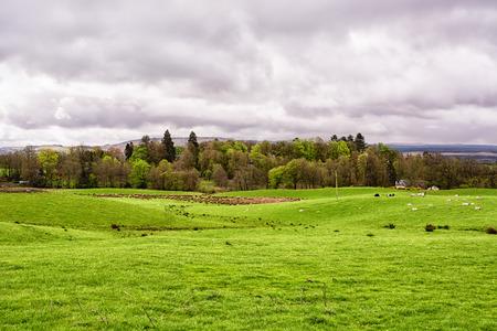 Green farm fields under a cloudy sky in Scotland, United Kingdom