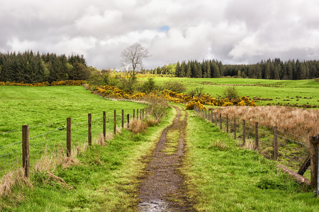 Rural path in the Scottish Highlands. West Highland Way 写真素材