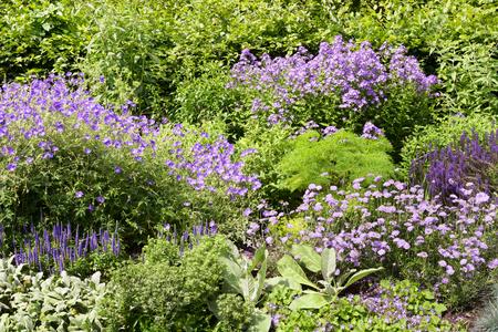 Different purple flowers in Regent Park in London, UK 写真素材