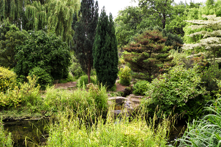 Plants and trees by the pond in Regent Park in London, UK