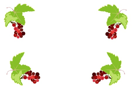 red currant: bunch of red currant frame isolated on white