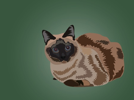 siamese: sitting siamese cat on the green background