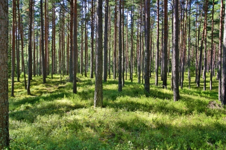 touched: Grass and trees in forest touched by sunlight Stock Photo