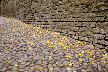 Yellowed leaves falled everywhere on street at autumn photo