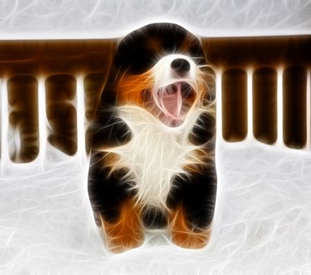 yawing: Aislado bernese monta�a perro marioneta est� gui�ando ampliamente Foto de archivo
