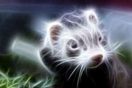 Zoomed ferret face with dirty nose looking somewere Stock Photo - 18285658