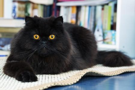 Black male cat show interest at photo camera Stock Photo - 21926910