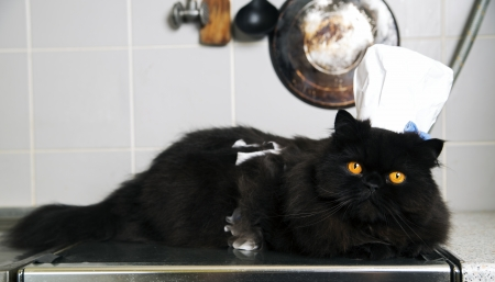 Black cat lay on stove with funny look photo