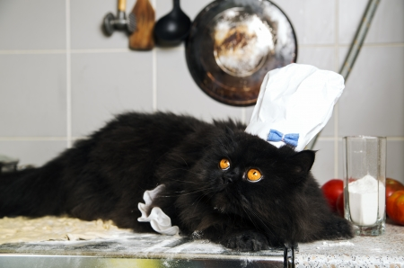 Black cat on mealy stove with terrified look photo