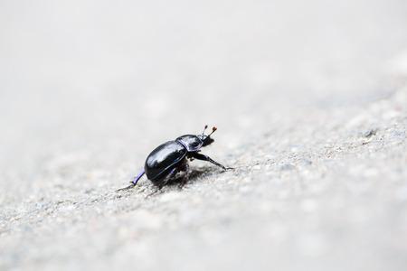hardwoods: Black coloured bug on the asphalt grey backgroung
