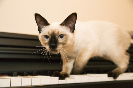 pussycat: Brave pussycat is hunting on the keyboard
