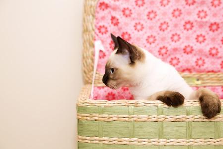 maldestro: Clumsy piccolo gattino nel cesto della biancheria