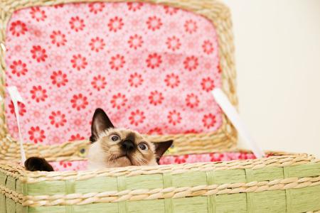 maldestro: Pussycat Clumsy guarda fuori del paniere