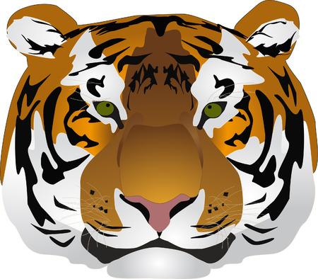 illustratie, tijger oog van de groene en roze neus
