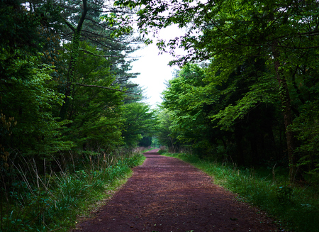 A secluded pathway in Saryuni Forest with trees and grass lined up at both sides of the dirt path, Jeju Island, South Korea. Stock Photo
