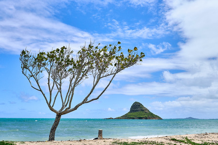A view of  Chinamans Hat island and a tree seen from the Kualoa Regional Beach Park.