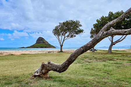 A tilted trunk of a tree at a beach park near the Kualoa Regional Park with the famous Chinaman's Hat island nearby at O'ahu, Hawaii.