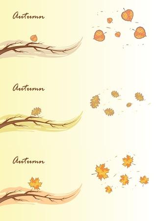 aspen leaf: Autumn branches.