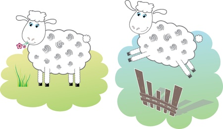 Two white sheeps Vector