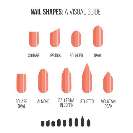 爪の形。ミニマリズムのスタイルの視覚的なガイド。  イラスト・ベクター素材