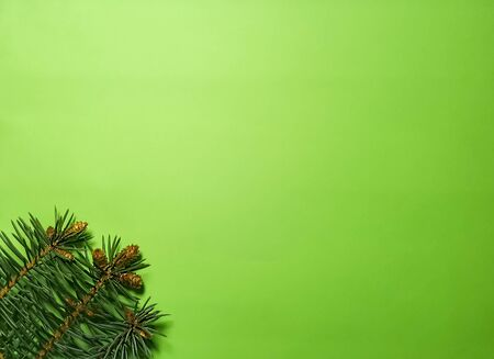 Christmas green background with coniferous branches and cones. Photo with empty space for text and design.