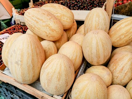 "Big ripe yellow melons on the counter farm market. High in vitamins A and C, American ""cantaloupes"" are some of the most nutritious melons. The Yellow melon has an oval shape."