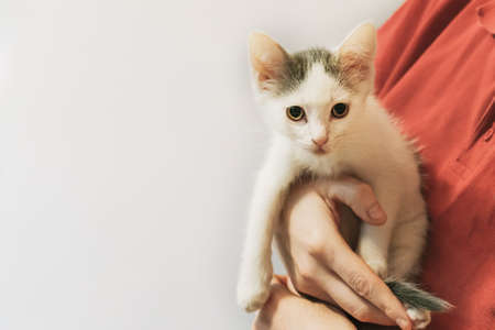 Small month-old white outbred kitten in the arms of woman in red T-shirt. Banner for the shelter of homeless animals. Take home a stray cat. Taking care of pets, a stray cats problem