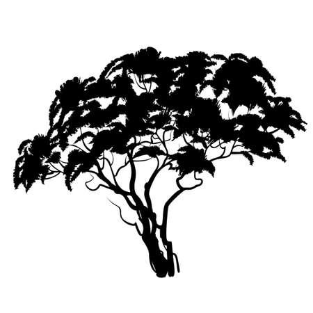 Black african acacia tree silhouette. Vector illustration Иллюстрация