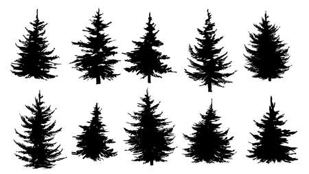 Set of silhouettes of pine trees, spruce or fir trees. Vector illustration. Vetores