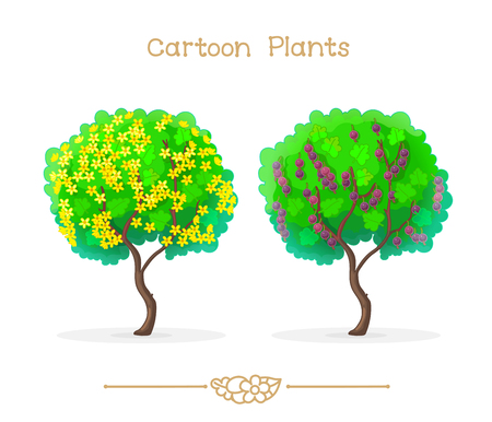 Yellow blooming and ripening jostaberries with green leaf on bush. Clipart isolated on transparent background. Hand drawn graphics. Nature design elements Illustration