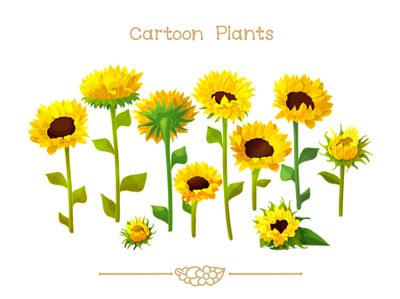 Illustration collection Cartoon Plants. Sunflower seeds head set. Clipart isolated on transparent background. Hand drawn graphics. Nature design elements