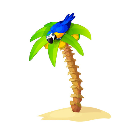 Vector Cartoon illustration on a tropical palm tree with coconuts with parrot on top. Clip art isolated on white background
