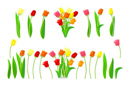 vector tulip flowers cute icons big set