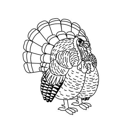 vector line cartoon animal clip art turkey bird