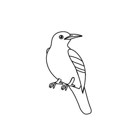 vector line cartoon animal clip art iora bird Illustration