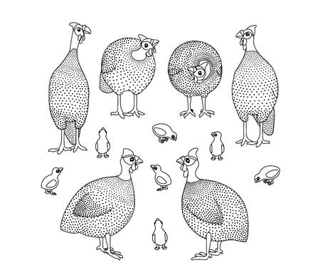 vector line cartoon animal clip art guineafowl birds