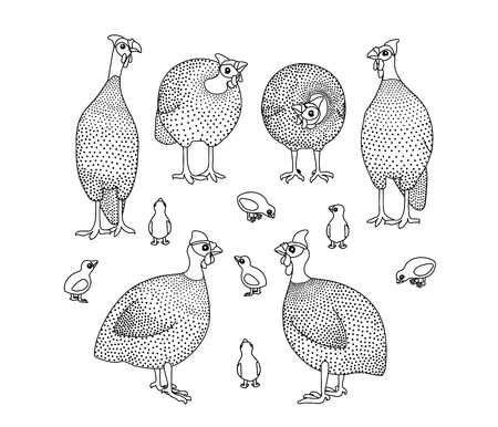 vector line cartoon animal clip art guineafowl birds
