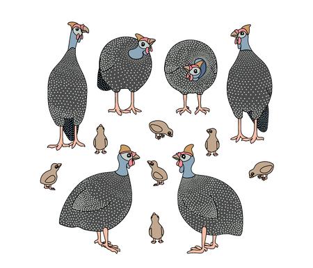 vector scandi cartoon animal clip art guineafowl birds Illusztráció